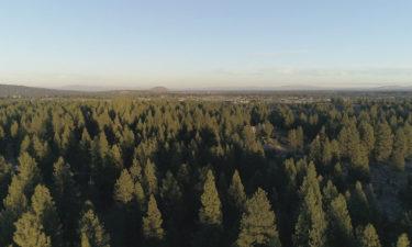 Central Oregon forest