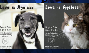 HSCO senior adoption discount