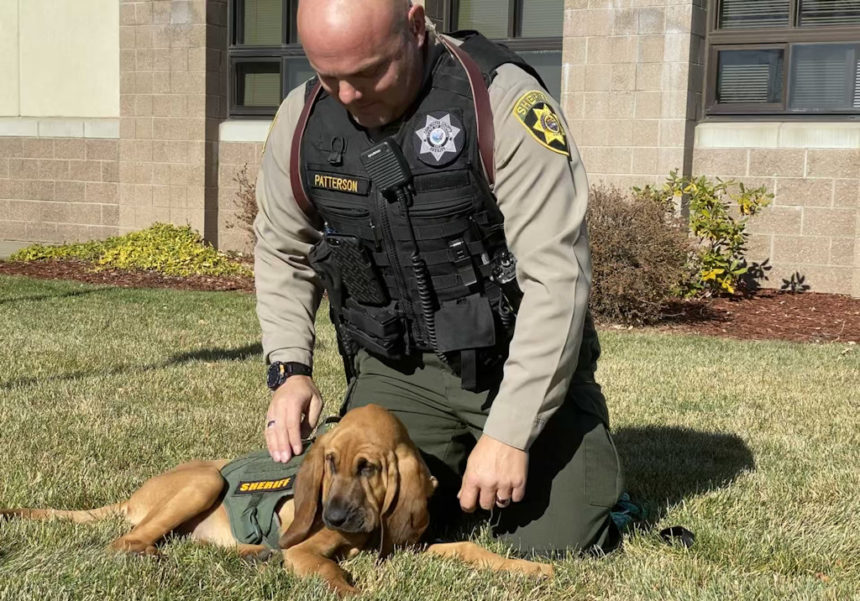 New DCSO bloodhound and partner